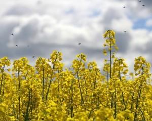 Seasonal Allergies | Guarantee Green Blog