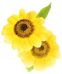 Summer Flowers | Guarantee Green Blog